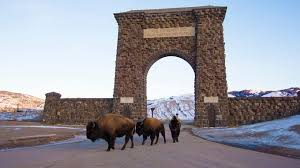 Bison Connect Department Of Interior 7 Amazing Places To See Bison Photos The Weather Channel