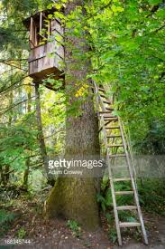 remote tree house in forest stock photo getty images