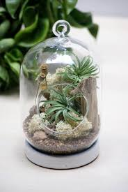 the 25 best hanging air plants ideas on pinterest airplant