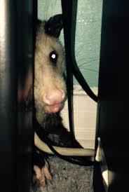 houston u0027s o possum kingdom