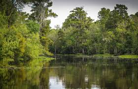 Louisiana landscapes images Free stock photo of swamp landscape in louisiana public domain jpg