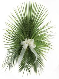 palm fronds for palm sunday date palm fronds the paraclete catholic bookstore