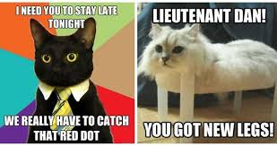 Funny Cats Meme - 37 of the best cat memes the internet has ever made
