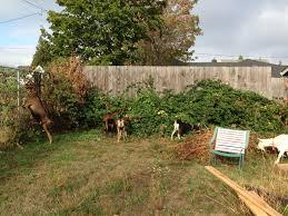 goats our portland farm