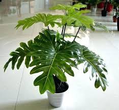 decorative indoor plants decorative plants marvelous decorative indoor plants compare prices
