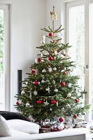 wonderful looking christmas trees real charming design or fake bbc