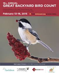 join the u201cgreat american backyard bird count u201d at scotts bluff and