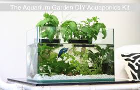 hydroponics garden with fish home outdoor decoration