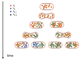 genes free full text antifragility and tinkering in biology