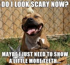 Pitbull Meme - scary pitbull meme on imgur