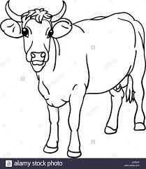 isolated animal illustration cow draw art isolated animal mammal