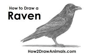 draw raven crow
