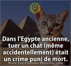 Chat Meme - citation courte dans l egypte ancienne tuer un chat m礫me
