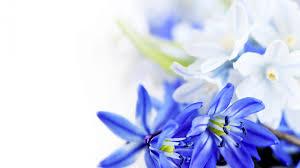 Flower Wallpaper Blue Flower Wallpaper