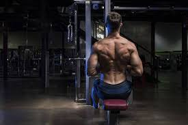 the best way to build muscle body in works