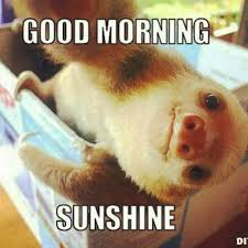 Sexy Monkey Meme - funny good morning meme cute and beautiful pictures for him her