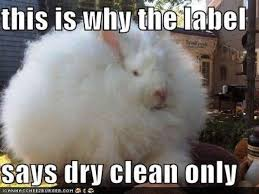 Meme This - 48 very funny bunnies meme pictures of all the time