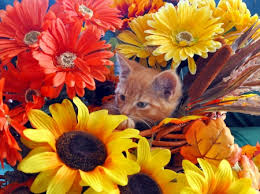 thanksgiving kitten cats animals background wallpapers on