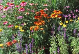 the easy way to start your perennial flower garden