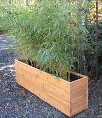 Rectangular Terracotta Planters by Best 25 Bamboo Planter Ideas Only On Pinterest Bamboo Screening