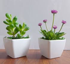 Plant Home Decor by Two Potted Artificial Succulents Yacon Small Flower Plants Home