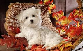 halloween dog background global pictures gallery