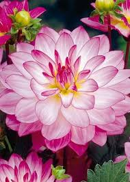 Types Of Planting Flowers - 17 best images about types of plants flowers on pinterest