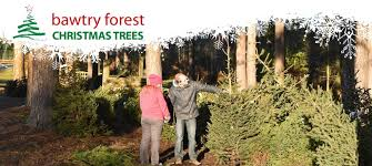 christmastree remarkable real trees prices