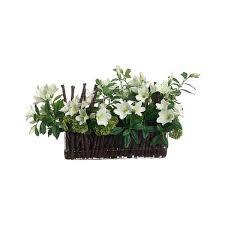 low light houseplants indoor plants for low light
