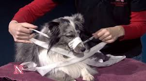 Comfortable Dog How To Make A Dog Muzzle Out Of Gauze Or Fabric Dogtime
