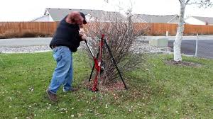 how to remove shrubs the easy way