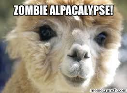 Alpaca Memes - funny alpaca memes
