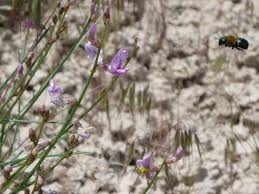great basin native plants programs natural resources native plant communities rare and