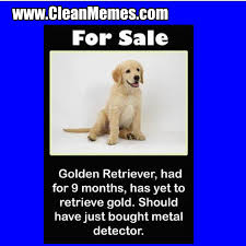 Golden Retriever Meme - golden retriever clean memes the best the most online