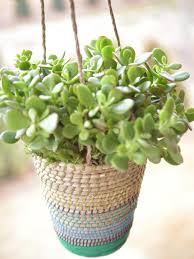 Best Low Light Indoor Plants by Best Outdoor Hanging Plants For Spring Hgtv