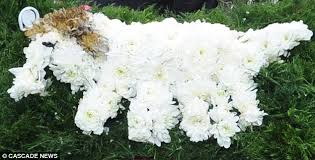 dog flower arrangement is stunned with his floral tribute for widow s