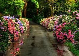 road full of flowers by bloodyshayne on deviantart