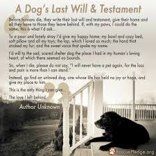 grieving loss of pet your dog died that you should done more
