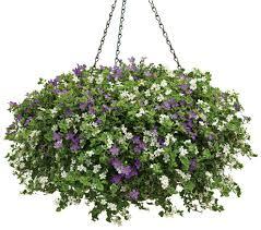 keep those hanging baskets looking beautiful michigan gardening