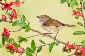 birds branches animals flowering trees colored background
