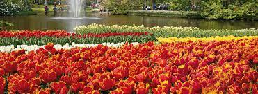 flower garden in amsterdam enjoy the keukenhof gardens holland pass
