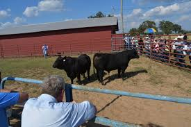 global trade forage and weed management strategies highlight cow