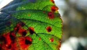 Viroid Diseases In Plants - the biology of viroid host interactions microbiologybytes