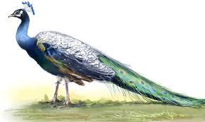 birds national birds