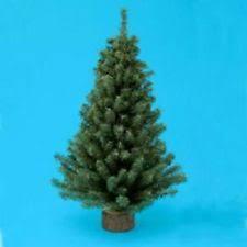 miniature trees ebay