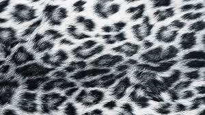 decorating colorful cheetah print wallpaper for beautiful
