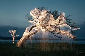 long branch tree lighting light appears to drip from trees in these long exposure photos by