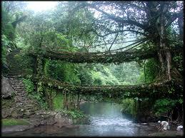 living root bridges in india