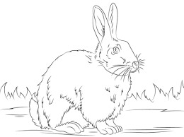 baby rabbit coloring pages img 11841 gianfreda net