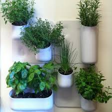 Indoor Herb Planters by Best 25 Indoor Wall Planters Ideas Only On Pinterest Herb Wall